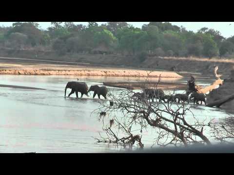 Zambia Tafika Area South Luangwa by day.mpg