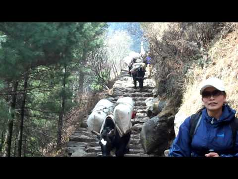 Day 1: trekking to Mt. Everest base camp by trekkingwithtrav