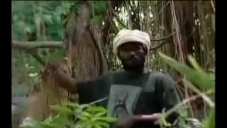 Chezidek - Leave The Trees