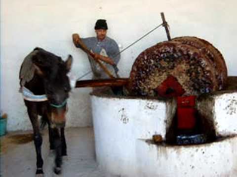 Making oil olives-Morocco