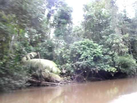 クイヤベノ エクアドルアマゾン Cuyabeno