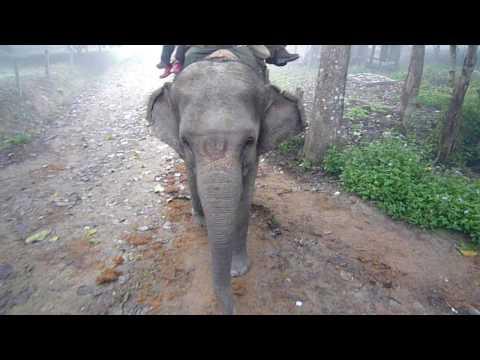 Chitwan-Elephant safari_01