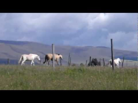 The Horses of Ride Andes