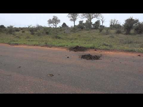 South Africa Day 6 – Dung Beetles in Kruger National Park