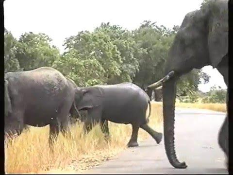 Afrique du Sud-de Johann- à parc kruger-2/5-DOMAINE DE RABREUX 77