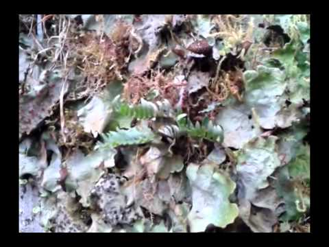 El Cajas National Park by Campus Trekking Tour Operator – Ecuador – mp4