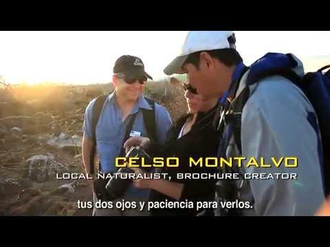 Galapagos Birds Life,  Galapagos's UW Field guide.