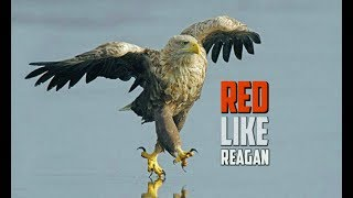 Buddy Brown - Red Like Reagan - GET THE NEW ALBUM TODAY!