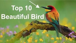 Top 10 Beautiful Bird's photo