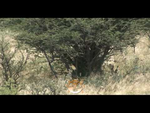 Hunt In Africa – Hunting Africa Safaris