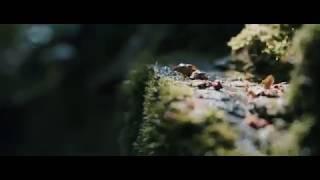 Cinematic Footage by Huawei P9 Lite! width=