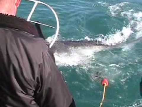 June 2009 – Shark Cage – South Africa