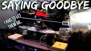 WHY I HAD TO LET MY ANT COLONIES GO | Emotional Video