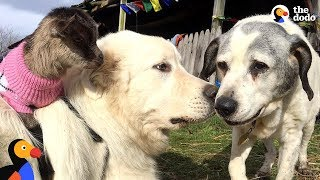 Dog Loves To Protect All The Animals In His Sanctuary - MICHAEL | The Dodo