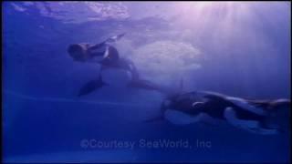 The Making of SeaWorld Documentary