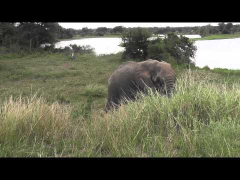 elephant,  Kruger, South Africa