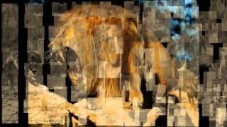 EL MEJOR VIDEO DEL MUNDO _ JAJ dj blend electronica dubstep