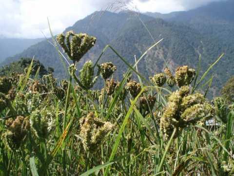 Helambu trekking – WWW.GUIDEINNEPAL.COM