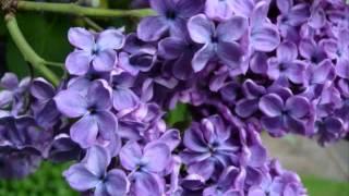 LILACS BY RACHMANINOFF ~ FRANCESCA HOWE, SOPRANO ~ JAMES GARDNER, PIANO  LIVE PERFORMANCE