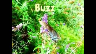 Buzz (Original Piano HD Version)