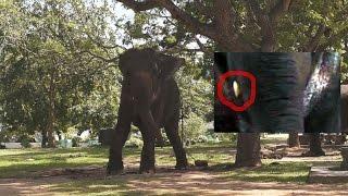Elephant Riding in Weherahena Poorwarama Rajamaha Viharaya Buddhist Temple