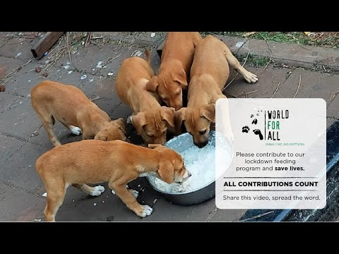 World for All Animal Care And Adoptions