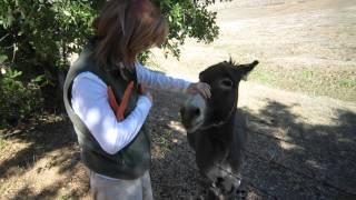 One Happy Donkey!