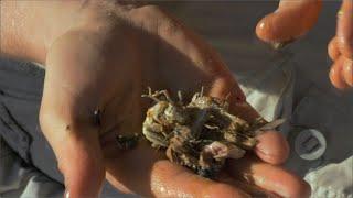 Salada de insetos - À Prova de Tudo l Discovery Channel