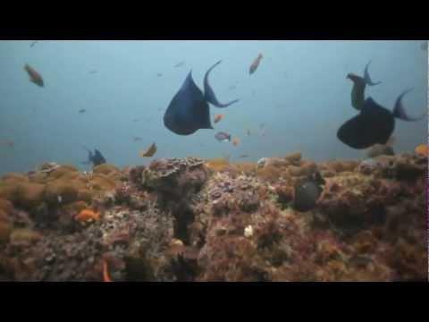 Aqua Planet – Protea Banks