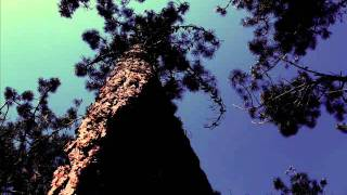Rachmaninov - Prelúdio Op. 23 Nº 5