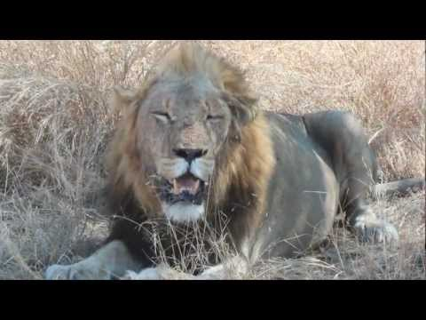 South Africa 2011 – Part 2 / 3