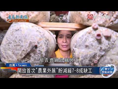 六上ch5   年輕人出走農村 台灣農業缺工引爆危機|寰宇整點新聞20190419 - YouTube