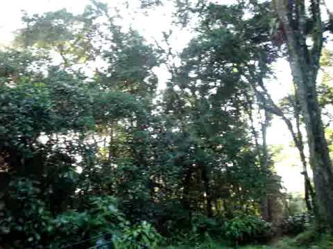 SELVA NEGRA, MATAGALPA, NICARAGUA