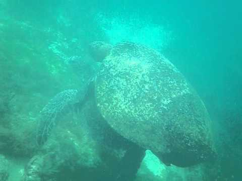 Ecuador   Galoapagos   Underwater part 15