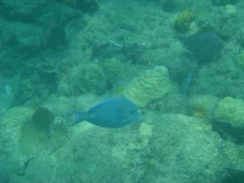 rincon puerto rico underwater video