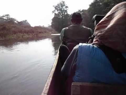 Crocodiles in the jungle river. Nepal