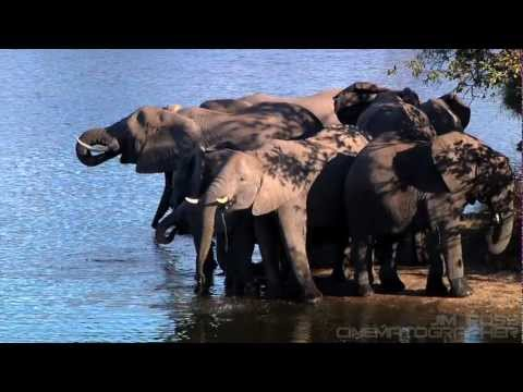 Lions, Hippos, and Elephants- Oh my! Richard Branson's Game Preserve Ulusaba, South Africa