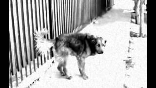 "MAFIA  - "" Like A Dog "" (Lyric Video)"