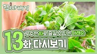 진짜배기 13화 다시보기 (구수한 차로 즐길 수 있는 다래순, 우리나라 대표 텃새 '꿩') 다시보기