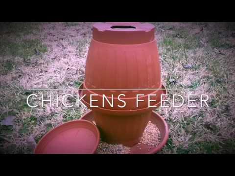 Come costruire una mangiatoia per polli animali dal mondo for Quanto costruire una casa da 3000 piedi quadrati