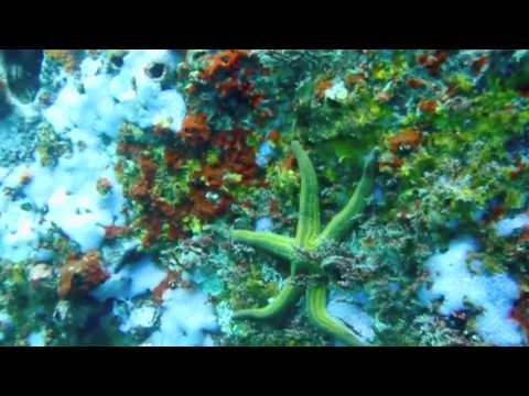 Galapagos Diving.m4v