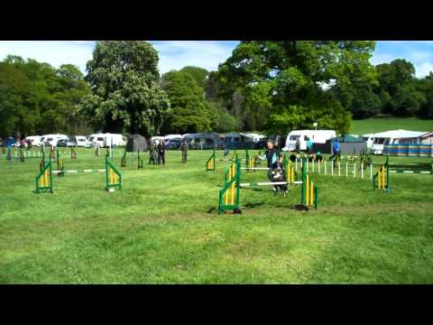 Fair City Dog Agility Competition Scone Scotland