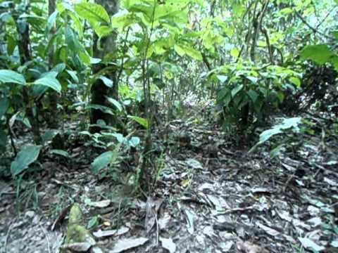 Macaquinhos no Centro de Recuperação de Animais (Amazônia Equatoriana) – Equador