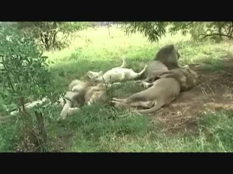 Safari i Sør-Afrika og Botswana