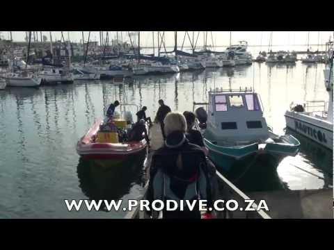 Sardine Run Port Elizabeth News 23 May 2012.mov