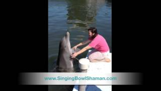 Healing Energy and Dolphins