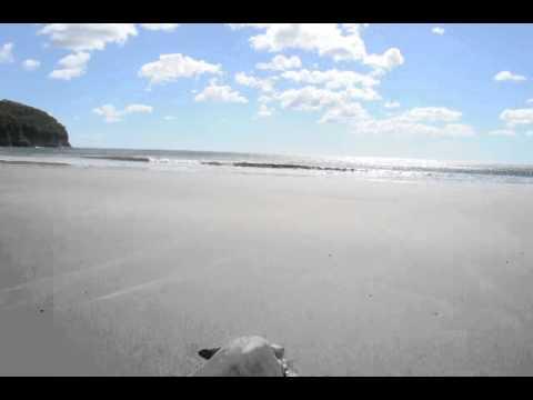 Green Turtles laying eggs on Mansanillo Beach II