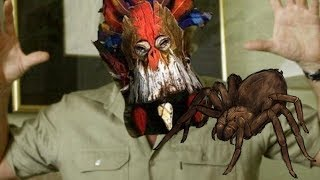 Wurzzag Imports Australian Spiders to Save his Disaster Campaign
