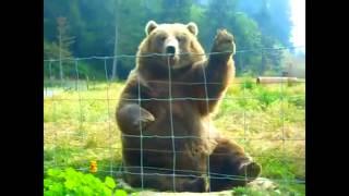 We bare bears(IRL)