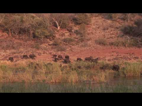 Hunting Makuya-H.264 10.3Mbps.mov